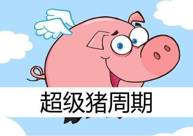 超级猪周期或将来临 专家却建议养殖户:切勿盲目补栏