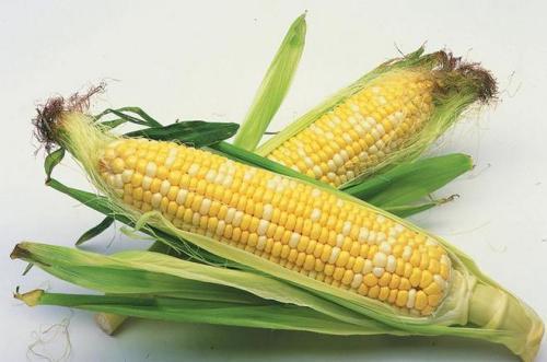 拍卖降温山东涨价玉米市场冰火两重天