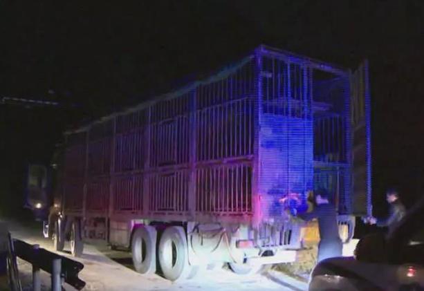 博白县截获一非法调运生猪车辆,货主被罚款2.1万元