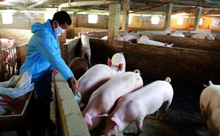 景宁多部门对生猪养殖场开展执法检查