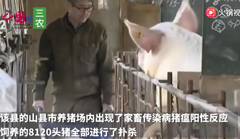 日本岐阜县再次发现猪瘟感染 扑杀8120头猪