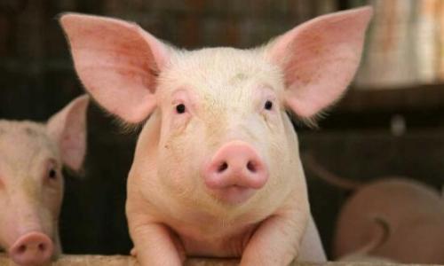 景宁县多部门联合对生猪养殖场开展执法检查
