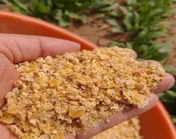 豆粕期价上行存在压力,豆粕路在何方?