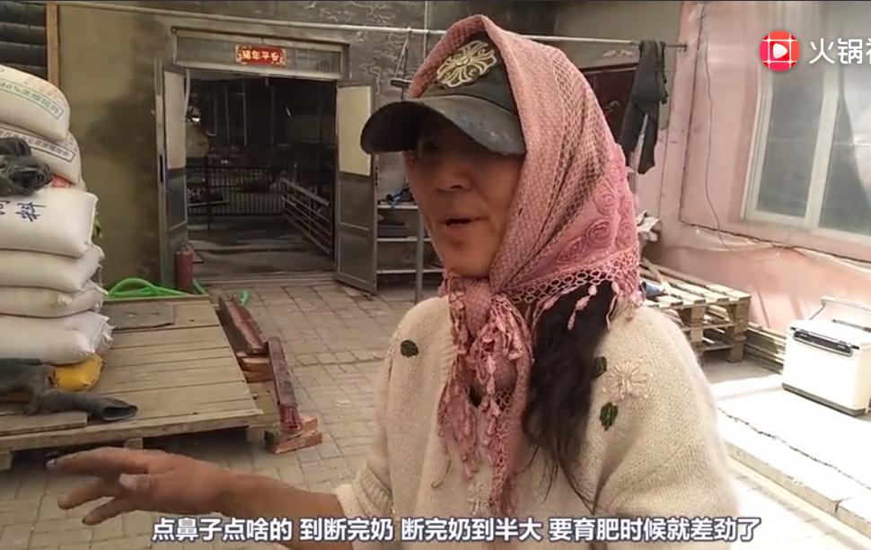 农村大姐家养猪从来不生病,看她平时都给猪吃啥?这样也可以?