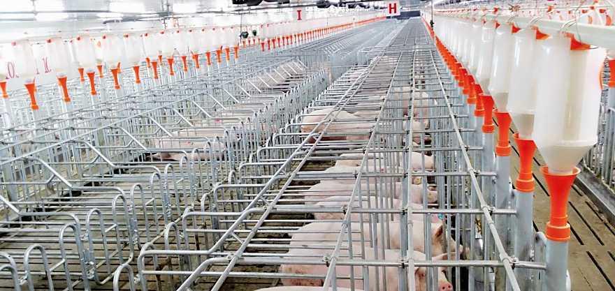 猪肉股持续上涨,券商普遍认为6月猪价上涨开启