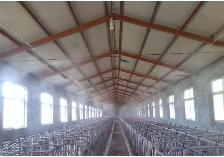 规模猪场非瘟后复产与带毒生产方案