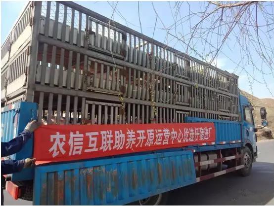 开原运营中心助养户老王的783头生猪出栏了!