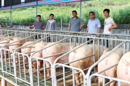 如东生猪存栏量控制在74万头内