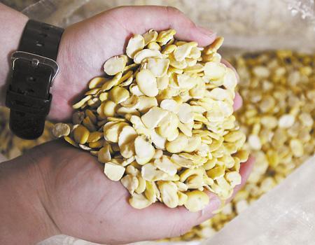 豆粕价格回调不宜过分看空 生猪供应偏少后期或带来不利