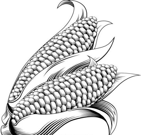 2019年06月15日全国各省玉米价格及行情走势报价表