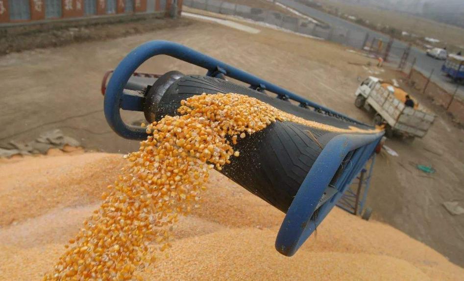 玉米期价高位回落,下行空间仍受限