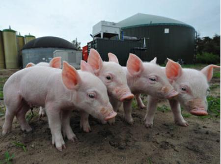 2019年6月18日(10至14公斤)仔猪价格行情走势