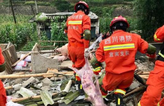 """长宁地震致300多头猪被埋 消防员与村民营救""""二师兄"""""""