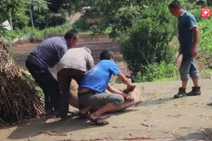 四川老汉连续杀4头猪,两农户怕猪得瘟病 都杀了