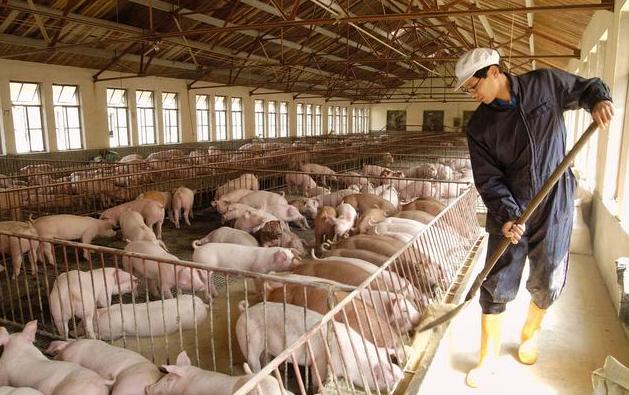 环保成为不可忽视话题,猪场的首要任务应是控制污染