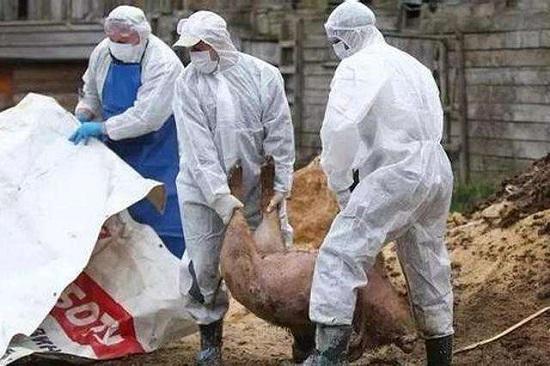 老挝发生7起非洲猪瘟疫情,疫区均位于沙拉湾省Toumlan县