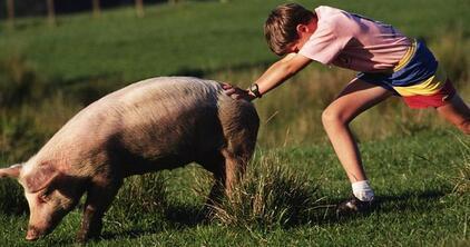 国内猪价大涨,进口猪肉已是蠢蠢欲动!