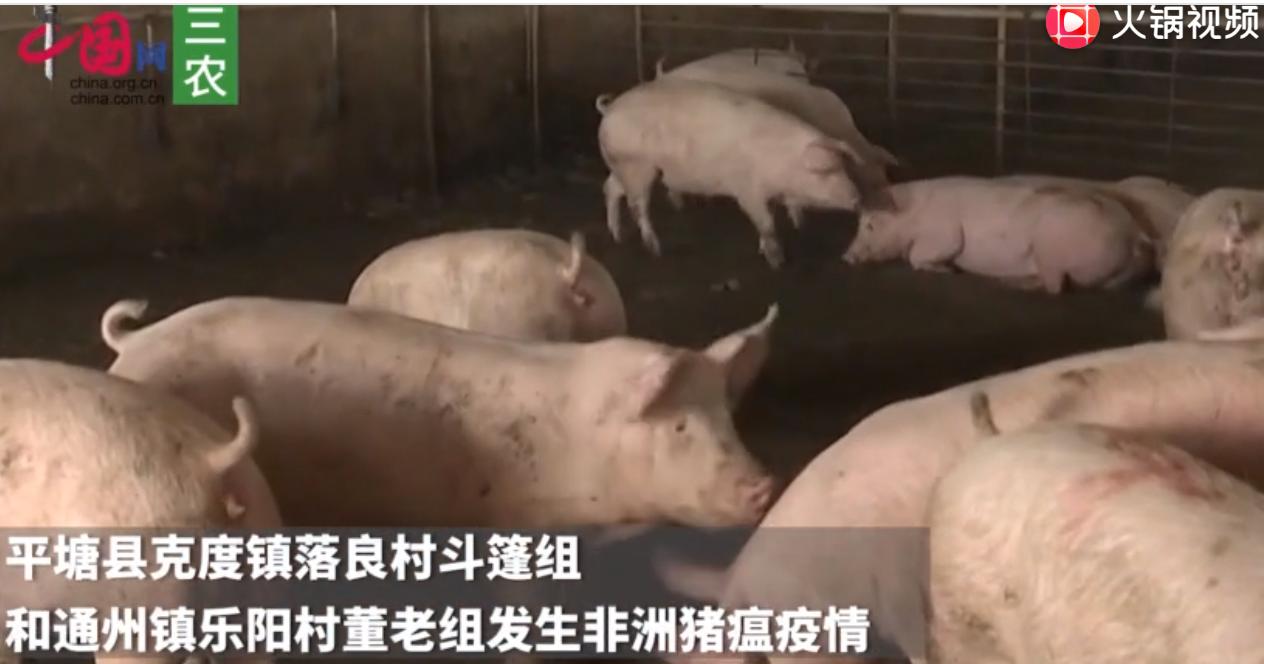 农业农村部:贵州省黔南州平塘县发生非洲猪瘟疫情
