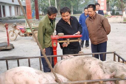 收猪人无意泄露5条收猪潜规则,原来猪农都是这样被坑惨的