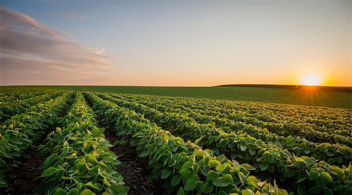 减持后大北农实控人套现4.30亿?业务亏损、引入国资失败……