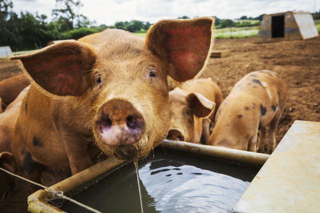 重磅!生态环境部发布畜禽养殖行业排污许可证申请与技术规范