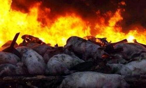 乌克兰东部发生一起非洲猪瘟疫情,疫情源头暂未知
