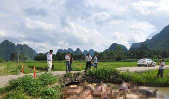 30余头病死猪被随意丢弃 广西钟山检察院提起公益诉讼