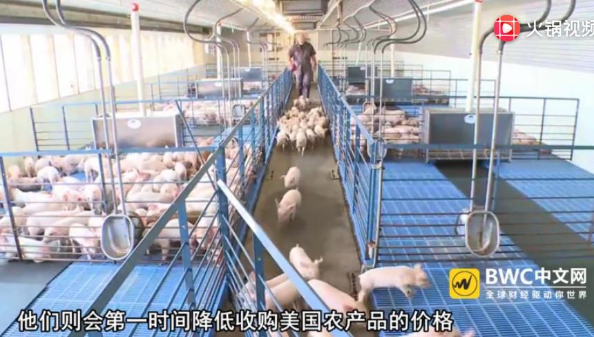 中国买家停购数千吨美国猪肉,美上百个农场破产,事情又有新进展