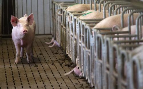 猪价调整继续扩大,南北价差缩小