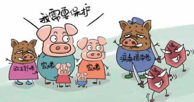 非洲猪瘟疫情最新消息:宁夏中卫市沙坡头区发生非洲猪瘟疫情