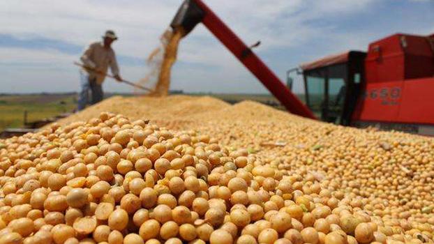 大豆振兴计划开局良好,种植面积连续4年增加