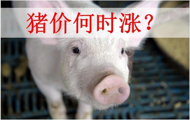 下半年猪肉价格还涨不涨?