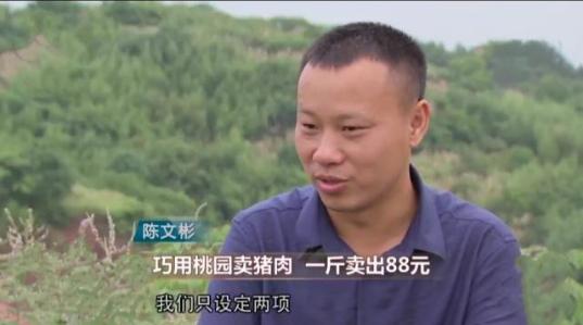 他辞职回农村养''藏香猪''为啥?
