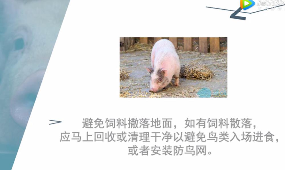 如何与非洲猪瘟保持安全距离,七【其他生物安全措施】欧维素