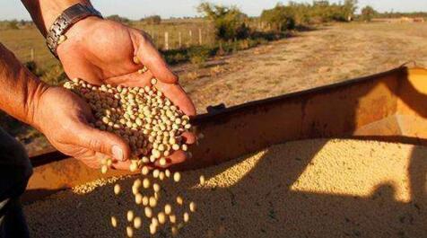 进口豆成本稳步提高,7月豆价或震荡上涨