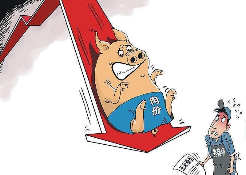 """消费终端需求疲软,生猪价格高价区或再度回归""""九元""""时代"""