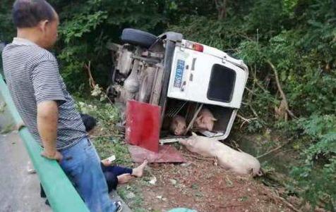 6座面包车改装塞进19头生猪,高速爆胎翻车2人受伤