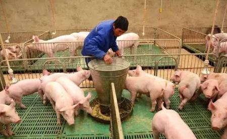山东省对45家一级种猪场给予临时性生产补助