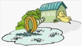 徐州丰县王沟镇两养猪场粪水直排,沟渠水体已发黑发臭