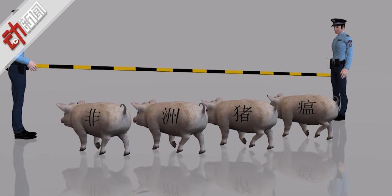 7月首例!广西陆川发生非洲猪瘟