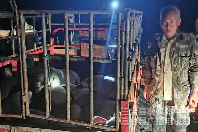 外县人员非法调运生猪入境 被我县公安机关行政拘留