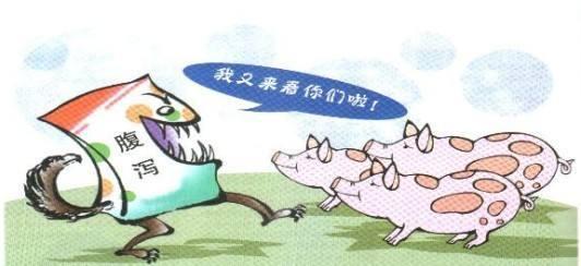"""断奶仔猪腹泻的原因及解决方案,牢记""""三不变三渐变""""原则"""