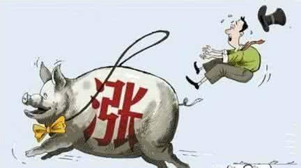 猪肉股逆市上涨表现突出,资金关注入场时机