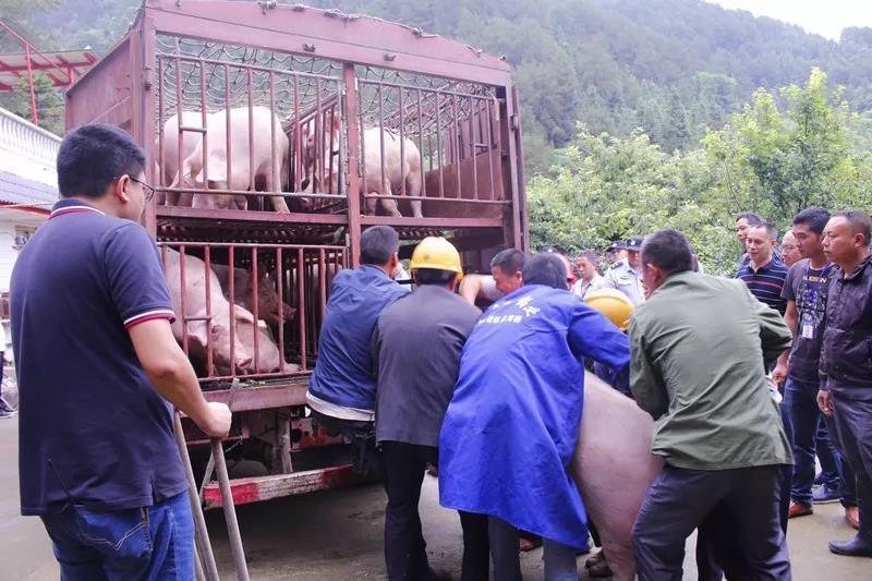 重庆市明月山风景区内开办生猪养殖场?司法强制搬迁!