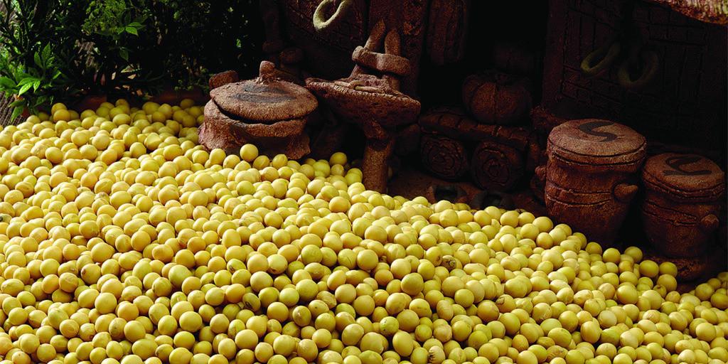 大豆面积回升 市场期待价涨