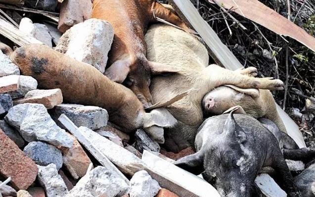 娄底两男子被拘!花门镇新家冲水库旁发现丢弃的死猪