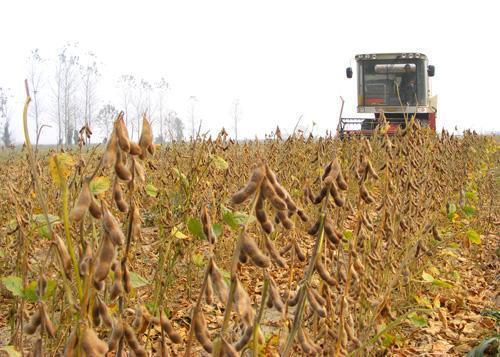 豆粕日报:短线豆粕现货有震荡整理需求 豆粕窄幅涨跌