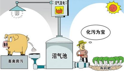 山东:年底前畜禽粪污综合利用率将达79%以上