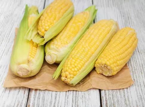 临储玉米拍卖市场持续降温,玉米行情走势预测
