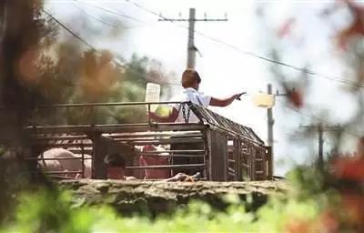 全国生猪存栏减少,70%的猪贩子也收不到猪!怎么办?